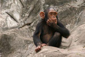 טנזניה - שאלות נפוצות למטיילים בטנזניה