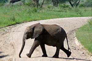 שמורות הטבע של דרום טנזניה