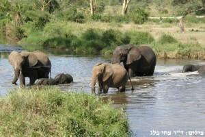 חמשת הגדולים פילים