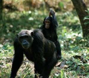 שמורת מהלה בטנזניה
