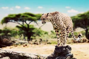 שמורת הסרנגטי – Serengeti National Park