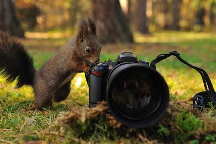 טיפים לצילום בספארי באפריקה