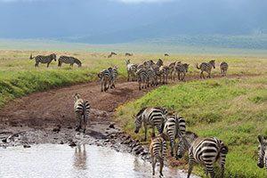 טנזניה טריפ - המומחים לטנזניה