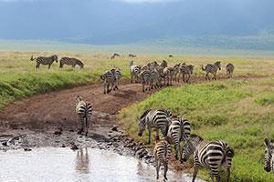 טנזניה עונה מומלצת