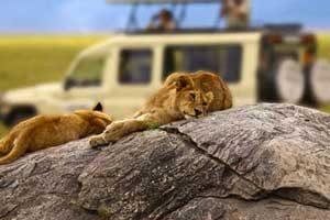 ספארי בטנזניה - מאורגן