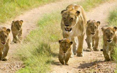 טיול קבוצתי לטנזניה וזנזיבר בפסח