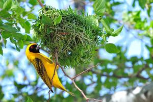 בעלי הכנף היפים והמיוחדים ביותר בטנזניה