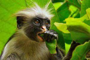 טיול ספארי מאורגן לטנזניה וזניזבר