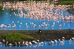 שמורת אגם מניארה