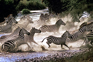 חמישה דברים שלא ידעתם על טנזניה