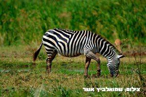 יום-בטיול-לטנזניה---טנזניה-טריפ-2