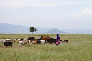 African-Cattle-Herder---Tanzania