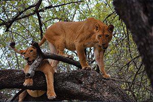 טנזניה טריפ - טיול לטנזניה
