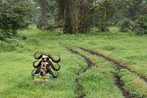 אטרקציות באזור השימור נגורונגורו