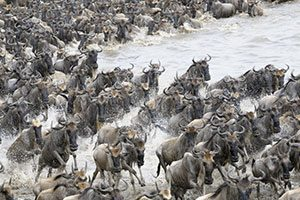 טיול ספארי בנדידה הגדולה בטנזניה