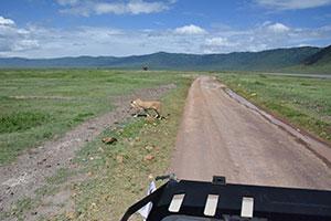 אז מה הקשר בין חצי מהחיים לטנזניה?