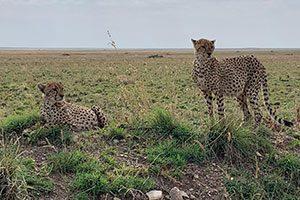 שמורת סרנגטי בטנזניה