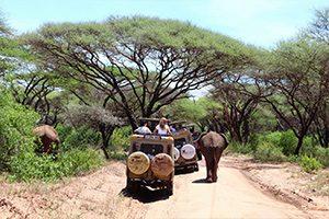 ג'יפ נוסע לצד פיל בשמורת טרנגירי טנזניה