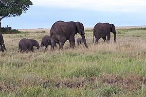 יומן מסע – חמישה ימים של טבע בטנזניה