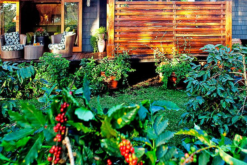 arusha-coffee-lodge