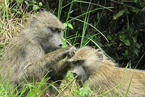 טנזניה טריפ - טיולים לטנזניה