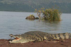 טיול פרטי לטנזניה