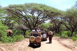 טנזניה טריפ - טיולי ספארי בטנזניה