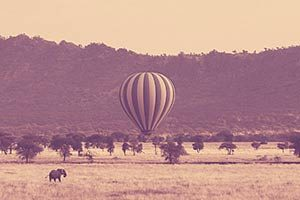פיל-וכדור-פורח-בסרנגטי-בטנזניה